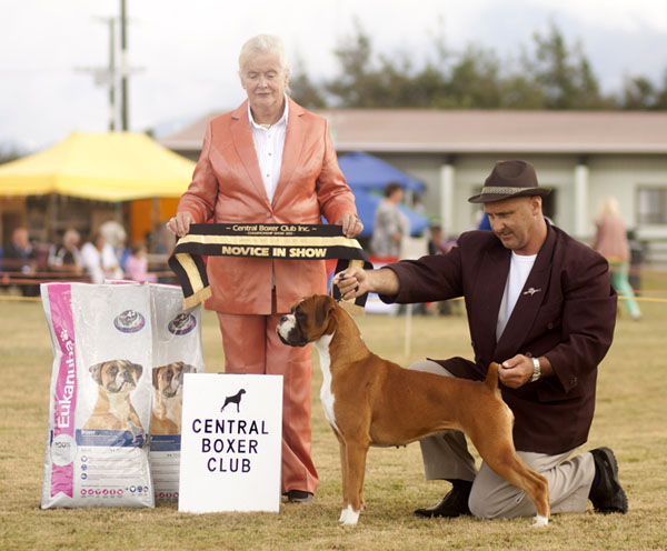 Best Novice in Show, Central Boxer Club