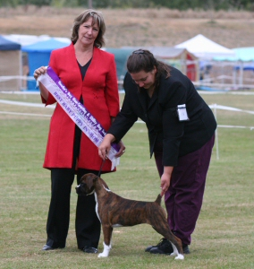 NZ & Aust Ch Ronin Sip of Scotch CGCB winning Best Baby Puppy in Show